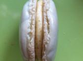 Macarons Praliné Pistache