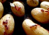 Pommes de terre au Lard et Laurier